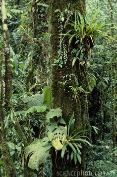 Tree trunk covered with epiphytes in a tropical rain forest in the Department of Choco, Colombia. Moss Garden, Garden Trees, Tropical Garden, Tropical Plants, Apocalypse Landscape, Jungle Tree, Plant Aesthetic, Terrarium, Home Garden Design