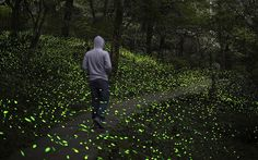 Thousands of fireflies light up a forest in the Dasyue Mountains, Wulai, Taiwan