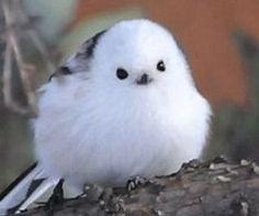 Mofumofu, Shimaenaga, pájaro lindo, Google la búsqueda de imágenes, imagen, hada, NAVER