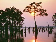 Louisiana. Louisiana. Louisiana.
