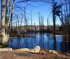 World's Most Haunted Forests: Freetown-Fall River State Forest Massachusetts