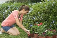 Image result for paintings of new zealand gardens with gardeners