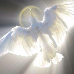 Dove of Peace❤️Holy Spirit Prophetic Art. Art Prophétique, Image Jesus, Jesus Christus, Saint Esprit, Prophetic Art, White Doves, Holy Ghost, Christian Art, Religious Art