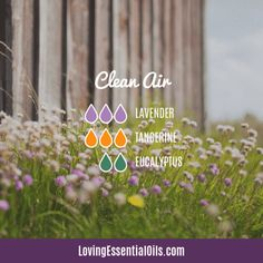 10 Essential Oil Blends For A Great Smelling Home by Loving Essential Oils | Clean Air with lavender, tangerine, and eucalyptus essential oil. Get more blends PLUS our free printable cheat sheet with the recipes, just visit our blog post. #lovingessentialoils #essentialoilblends #cleandiffuserblends