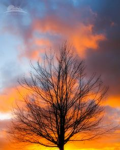 ✯I love bare trees. Not dead-only sleeping.