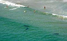 areal view #sharks# Matarangi beach New Zeland