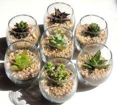 jardim de suculentas faça você mesmo usando potinhos de vidro