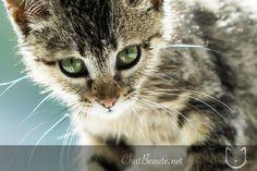 Norvegian kitty #yummypets