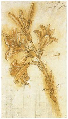Discovering da Vinci - Sketches of various plants by Leonardo da Vinci.