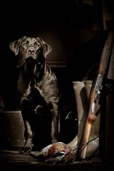 Future hunting dog pictures....
