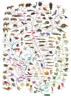 "A beautiful tree of life designed by The Open University""We should preserve every scrap of biodiversity as priceless while we learn to use i..."