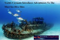 Yachts Caymans Introduces Adventurers To The Must See Dive Sites       #yachtscaymans #yachts #caymans #advenrurers #seedivesites #divesites