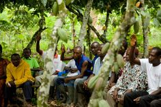 Over 80000 Youth To Be Trained In Cocoa Farming