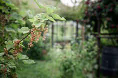 © bysahlia.com Gmunden Austria, Garden, Garten, Lawn And Garden, Gardens, Gardening, Outdoor, Yard, Tuin