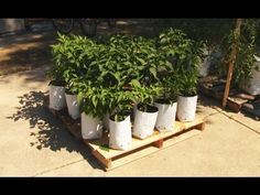 The Mobile Grow Bag Garden on pallet