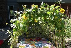 Sunflower teepee...http://hopscotch-online.com/category/make/