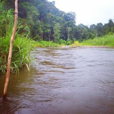 The relentless Brown River, Kokoda Track, Papua New Guinea