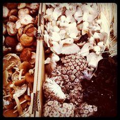 mushrooms at Eveleigh Markets.