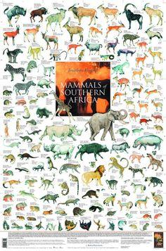 East African Mammals Poster   Mammals