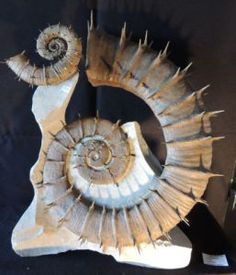 Fossil Ammonite Crioceras nolani, 40x50 cm, 130 million years old, Provence, France, Peter Pittmann Fossilien. Courtesy Olympia International Art & Antiques Fair.