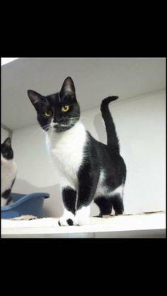 LOST CAT: 17/10/2017 - Bradford, West Yorkshire, England, United Kingdom. Ref#: L37864 - #CritterAlert #LostPet #LostCat #MissingCat