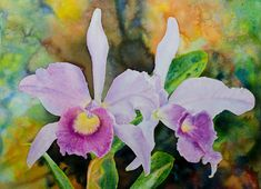 Paintings by Ross Barbera, Watercolor, Acrylic and Digital on Paper - Ross Barbera Orchids, Paintings, Watercolor, Digital, Paper, Plants, Beautiful, Pen And Wash, Watercolor Painting