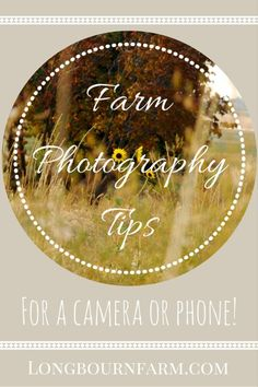 Farm Photography tips for your camera or phone! 5 tips + a free downloadable training to help you document your country life beautifully.