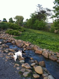 "if it is possible it would be cool to design a ""backyard waterfall"" that is long and narrow, like a creek. # diy dog park how to build How to Design a Dog Park Agility Training For Dogs, Dog Agility, Puppy Trainer, Teach Dog Tricks, Dog Enrichment, Dog Playground, Dog Runs, Dog Hacks, Dog Daycare"