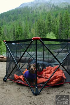 Camping with your dog is a lot of fun. unless they run off and and you can't find them! This list of gear can help make sure your dog doesn't get lost or into trouble at the campground. Camping Gear, Camping Hacks, Camping Trailers, Camping Cabins, Hiking Gear, Camping Equipment, Camping With A Dog, Outdoor Camping, Tent Trailers