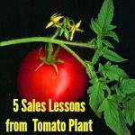 5 Sales Lessons from the Tomato Plant for YOUR Biz - http://www.brilliantbreakthroughs.com/5-sales-lessons-tomato-plant/