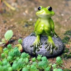 Cute Frog on Stone