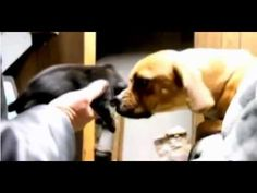 Puppy Rescued From Drainpipe!