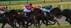 horse race in tokyo , Japan