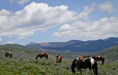 The main ingredient of a successful horseback riding vacation - the horse!