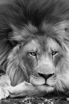 digipiXture.com - Google+ - I love this king ♥º•○●♥●○•º♥º•○●♥●○•º♥ #animals