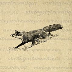 Fox Graphic Printable Digital Animal Image by VintageRetroAntique