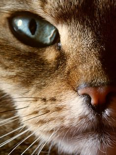 Close-up kitty.