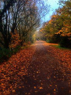 Dinton Pastures Autumn walk