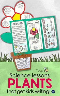 Life Cycle of Plants Unit, Investigations & Plant Life Cycle PowerPoint NGSS Creative Activities, Science Activities, Science Projects, Classroom Activities, Sequencing Activities, Photosynthesis Activities, Educational Activities, Kindergarten Science, Teaching Science