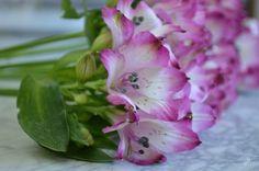 Flores - HOLLANDMAIA