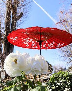 おはようございます😃 ☆ 上野ぼたん苑 ぼたんと飛行機雲✈️ ☆ #上野恩賜公園#公園#上野ぼたん苑#ぼたん苑#ぼたん #お写んぽ #写真が好きな人と繋がりたい #カメラが好きな人と繋がりたい #花が好きな人と繋がりたい #風景写真が好き#田舎の風景#はなまっぷ #滝#空#雲#自然#花#はなまっぷ#スナップ #マクロの世界#単焦点の世界 #iPhone7#キタムラカメラ写真投稿 #ペットが好き#愛犬#トイプードル♀#名前はトト
