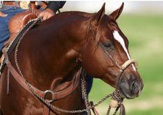 Love that it's a hackmore Beautiful Horse Pictures, Beautiful Horses, American Quarter Horse, Quarter Horses, Western Pleasure Horses, Reining Horses, Horse Gear, Chestnut Horse, Horse Portrait