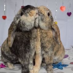 Love is in the air. http://thefluffingtonpost.com/post/87919662638/two-bunnies #Valentine