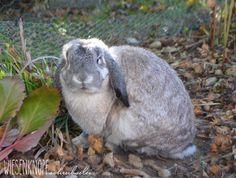 Unsere Kaninchen im Garten