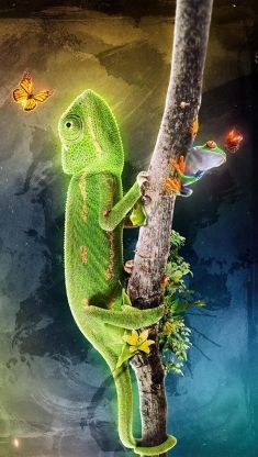 Camelion frog and a butterfly iphone 5 wallpaper