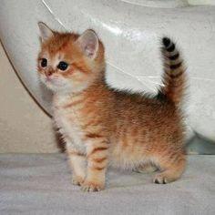Kitten fuzz