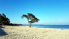 Mittelmeerfeeling am Strand von Südschweden, bei Åhus