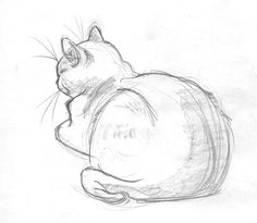 the best simple cat drawing ideas simple animal - cat drawing ideas Animal Sketches Easy, Easy Animal Drawings, Pencil Art Drawings, Art Drawings Sketches, Simple Sketches, Drawing Animals, Simple Drawings, How To Draw Animals, Drawings Of Cats