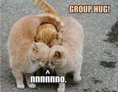 cute, even if you're not a cat fan.