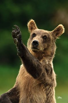 Come Back Soon - brown bear by Christopher R. Gray on 500px
